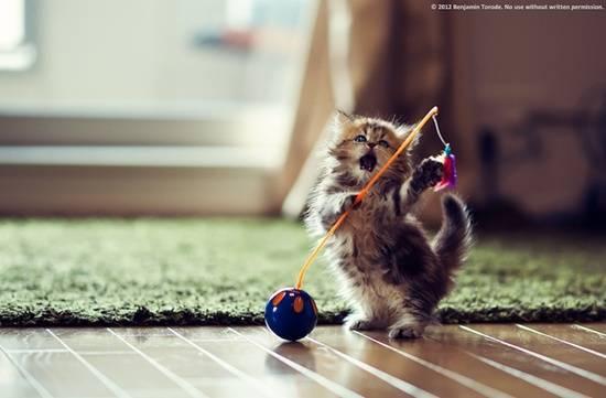 kucing-comel-main-permainan
