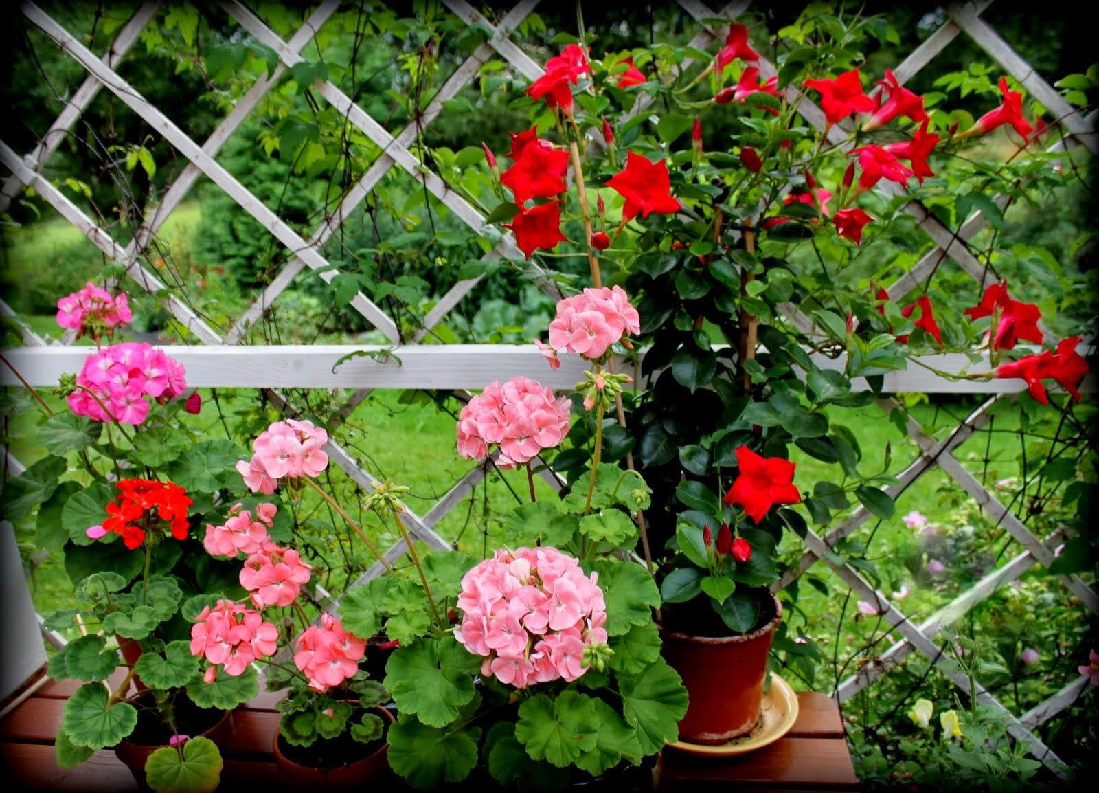 Terassin kukkasia