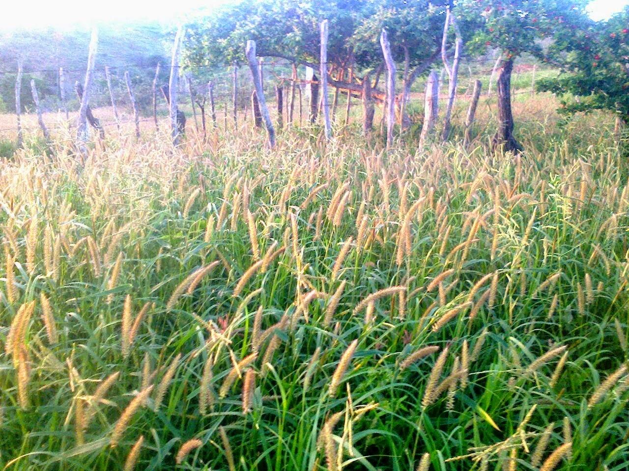 Vende-se uma fazenda na região da Feira do Rolo, município de Mairi