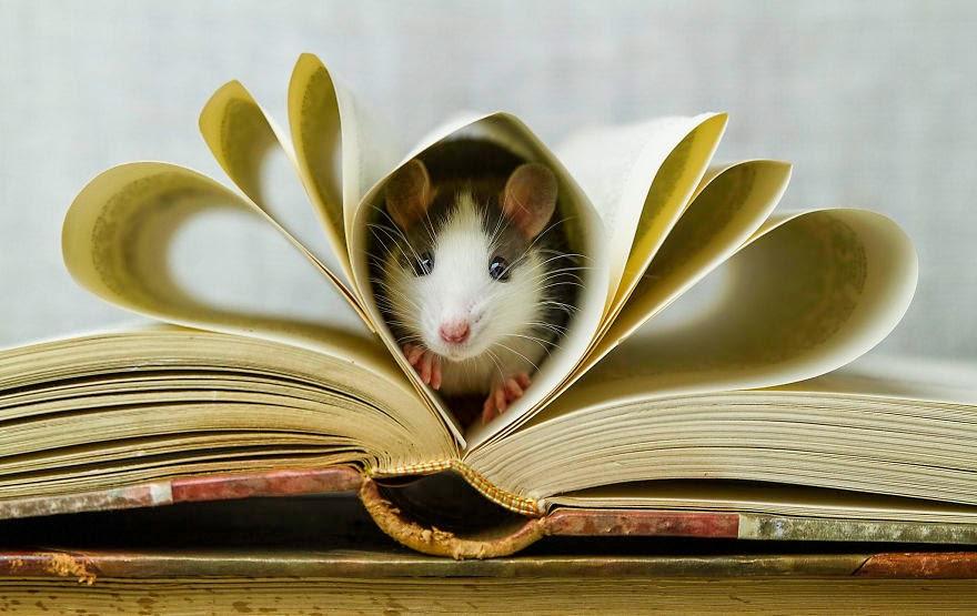 rato dentro do livro