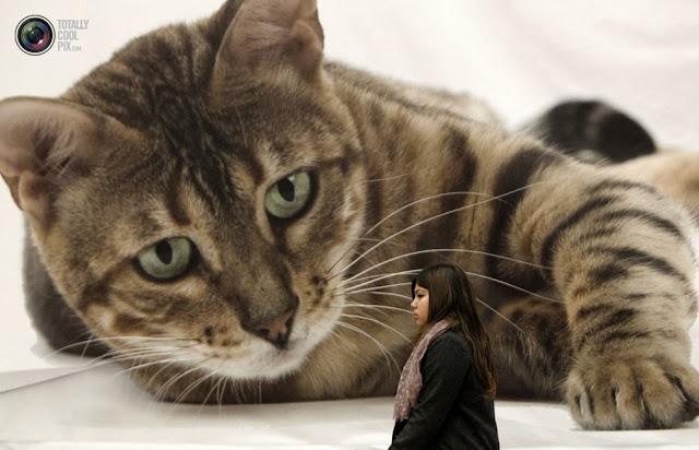 Девушка проходит мимо биллборда перед 21-й Международной выставкой кошек в Афинах, Греция. (John Kolesidis/REUTERS)