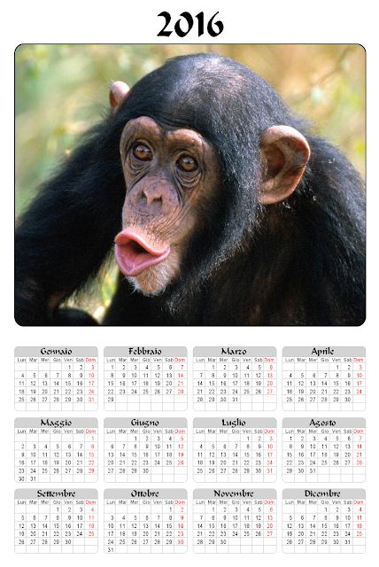 Calendario 2016 - Scimmia