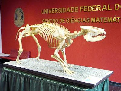 esqueleto de Carodnia