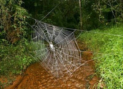 les plus grandes et r 233 sistantes toiles d araign 233 es records du monde