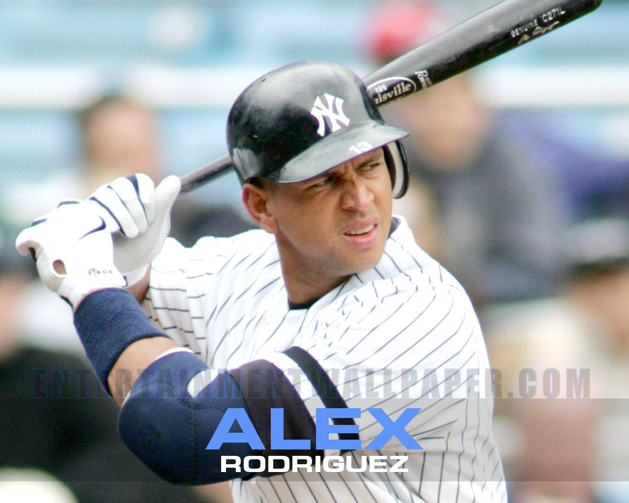 cat love alex rodriguez wallpaper hd