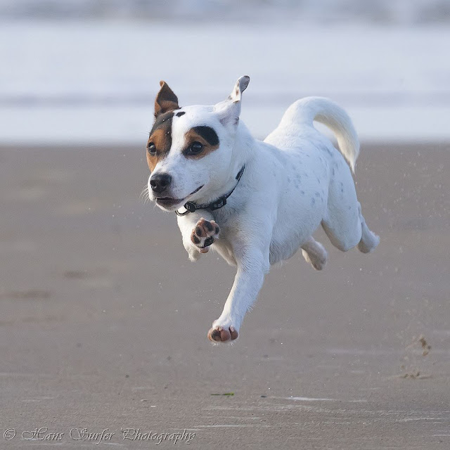 1 meter above sea level..Flying Parson Terrier