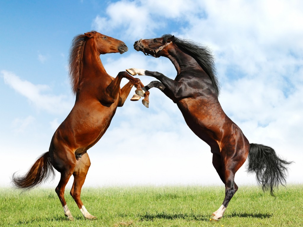 Top   Wallpaper Horse Yellow - long+tail+european+horse  Best Photo Reference_661094.jpg