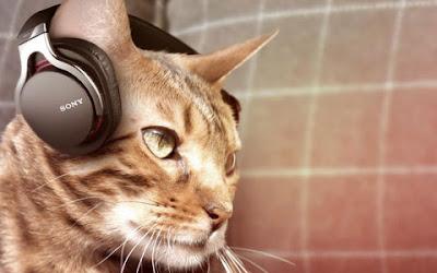 Sony meluncurkan headphone khusus kucing