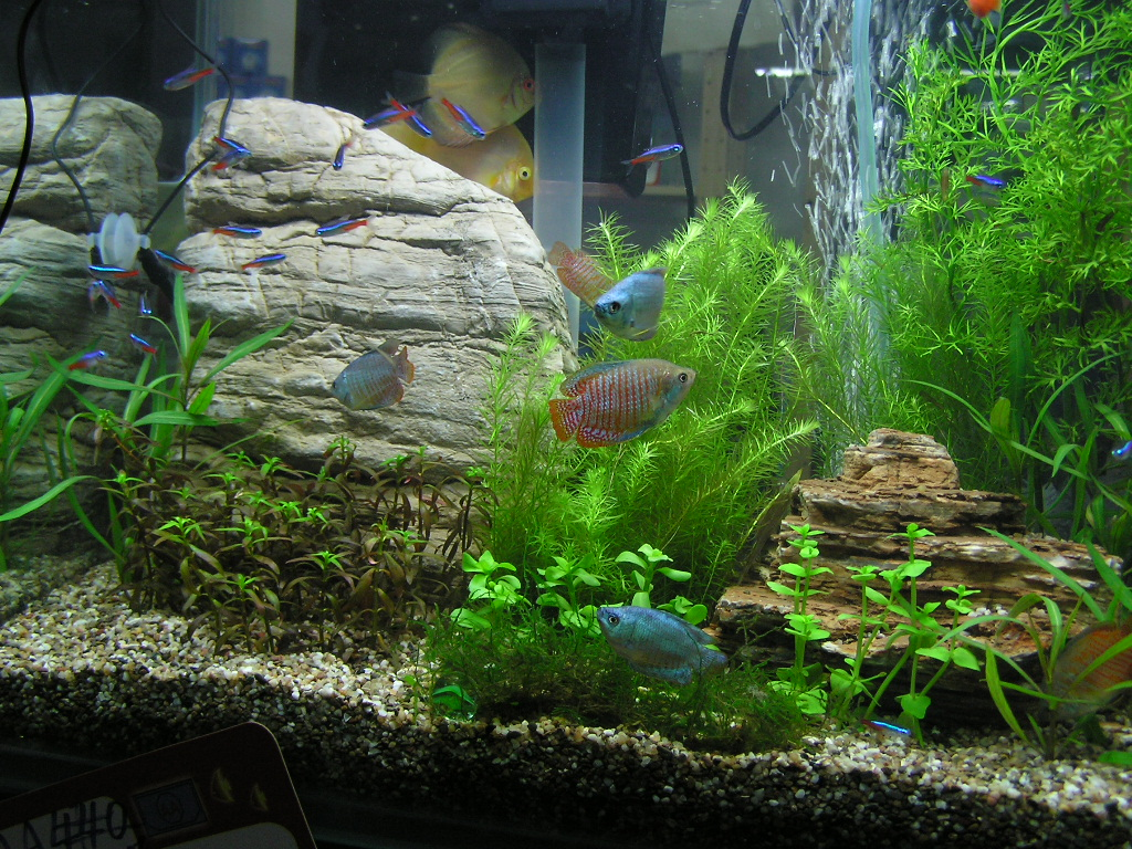 My Fresh Water Aquarium - Natural Planted Tank (Walstad ...