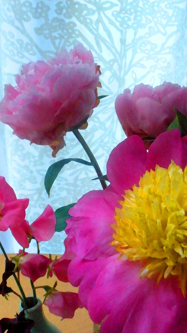 pink peonies, key to abundance