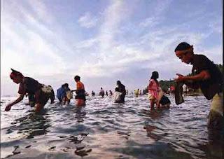 tradisi bau nyale di kaliantan Lombok Timur