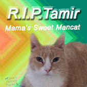 Lots of Purrs & Prayers to Tamir's Family!