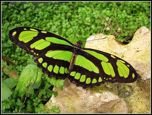 motyle mego życia.