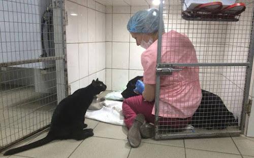 Gato paraplégico ajuda a cuidar de animais doentes em clínica veterinária