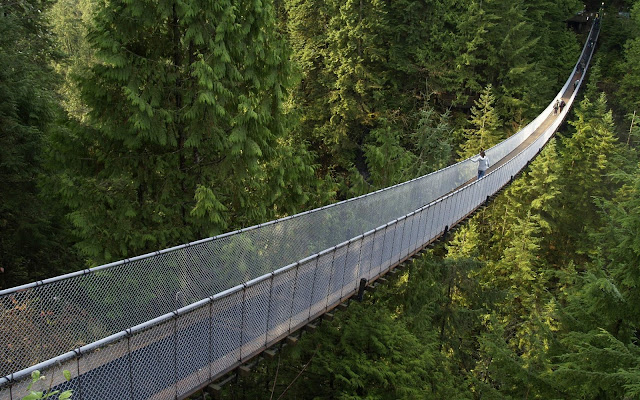 Imagen Puente de Madera en Medio del Bosque