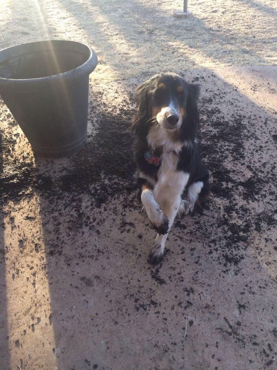 Cute dogs - part 8 (50 pics), dog with dirty paws after digging a plant pot