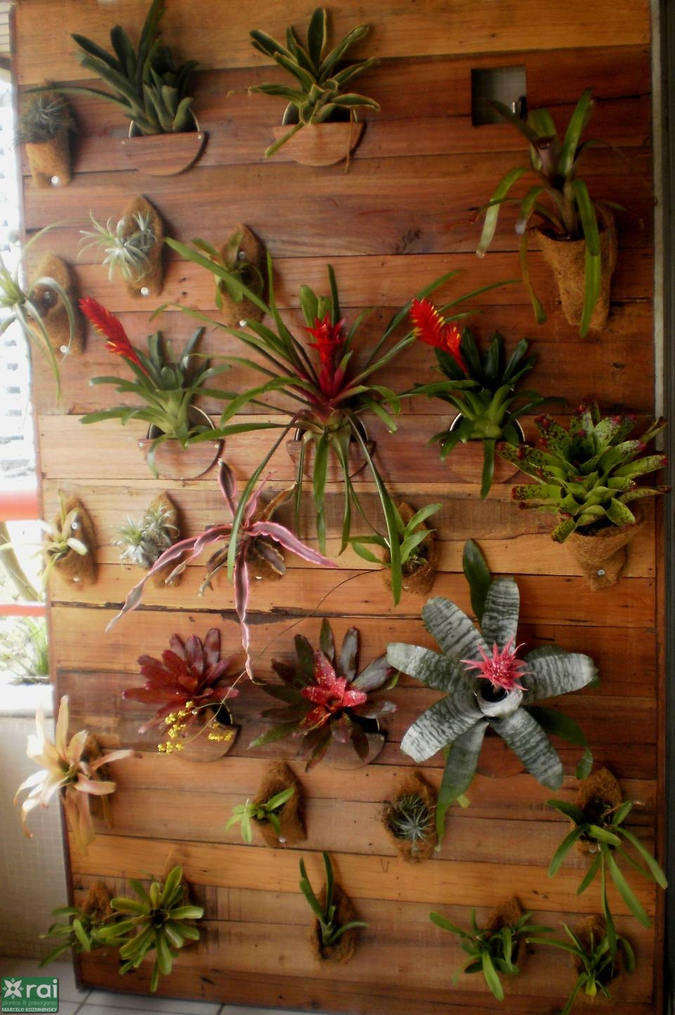 plantas sol jardim vertical:Jardim da Terra: TIPOS DE JARDIM: Jardim Vertical