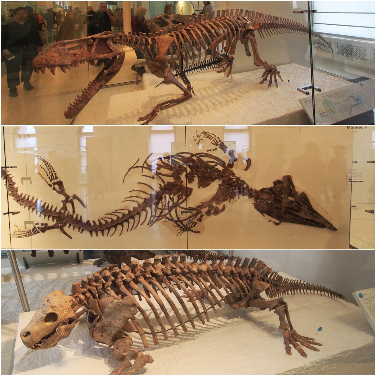 Wombat Natural History Museum New York
