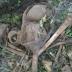 Encuentran Esqueleto humano en unos matorrales A 5 Kilómetro de