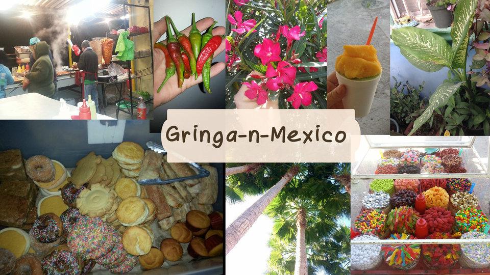 Gringa-n-Mexico