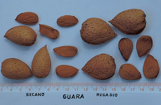 Almendra Guara Regadío