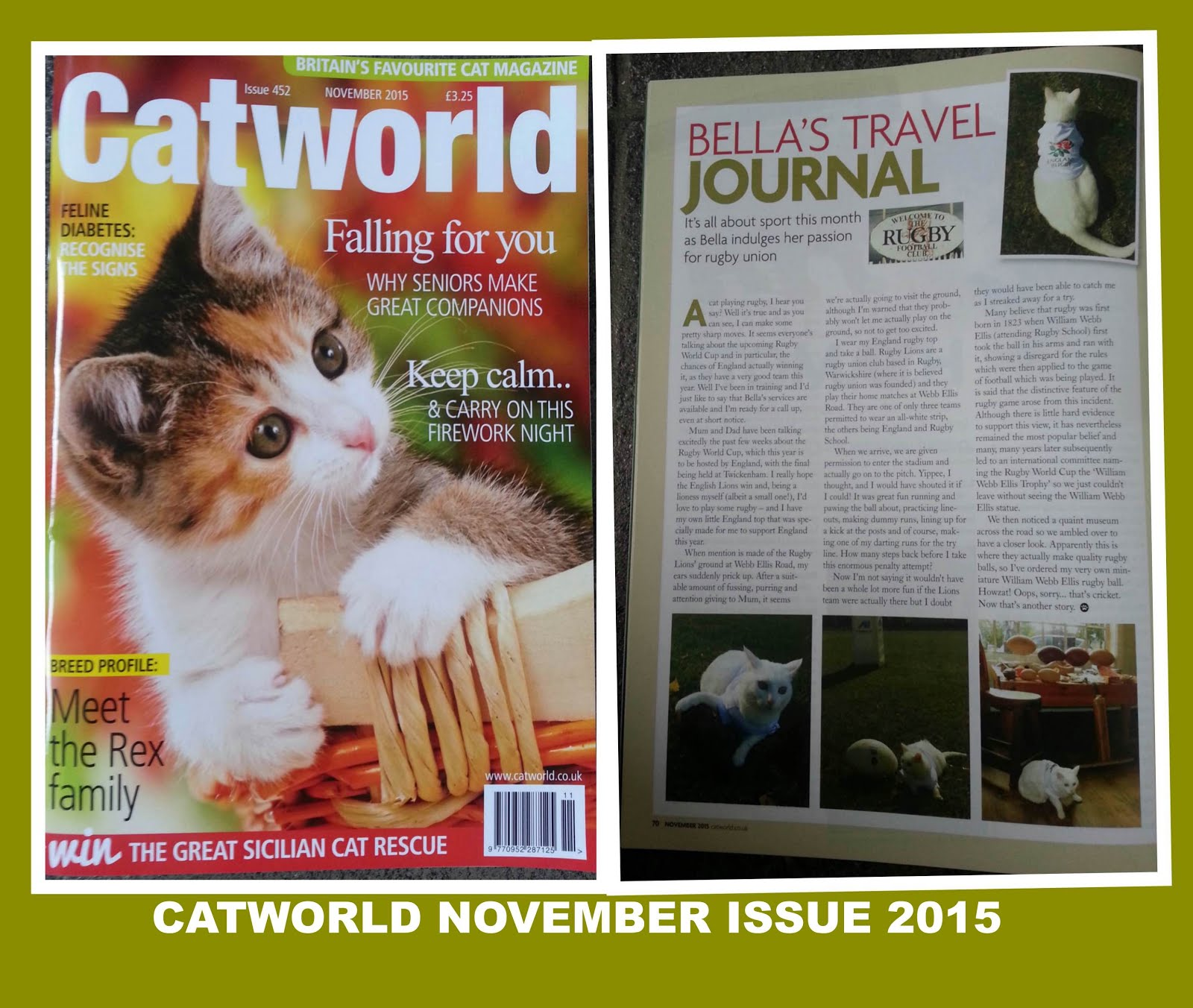 CATWORLD NOVEMBER ISSUE 2015