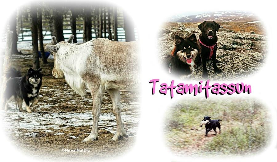 Tatamitassun