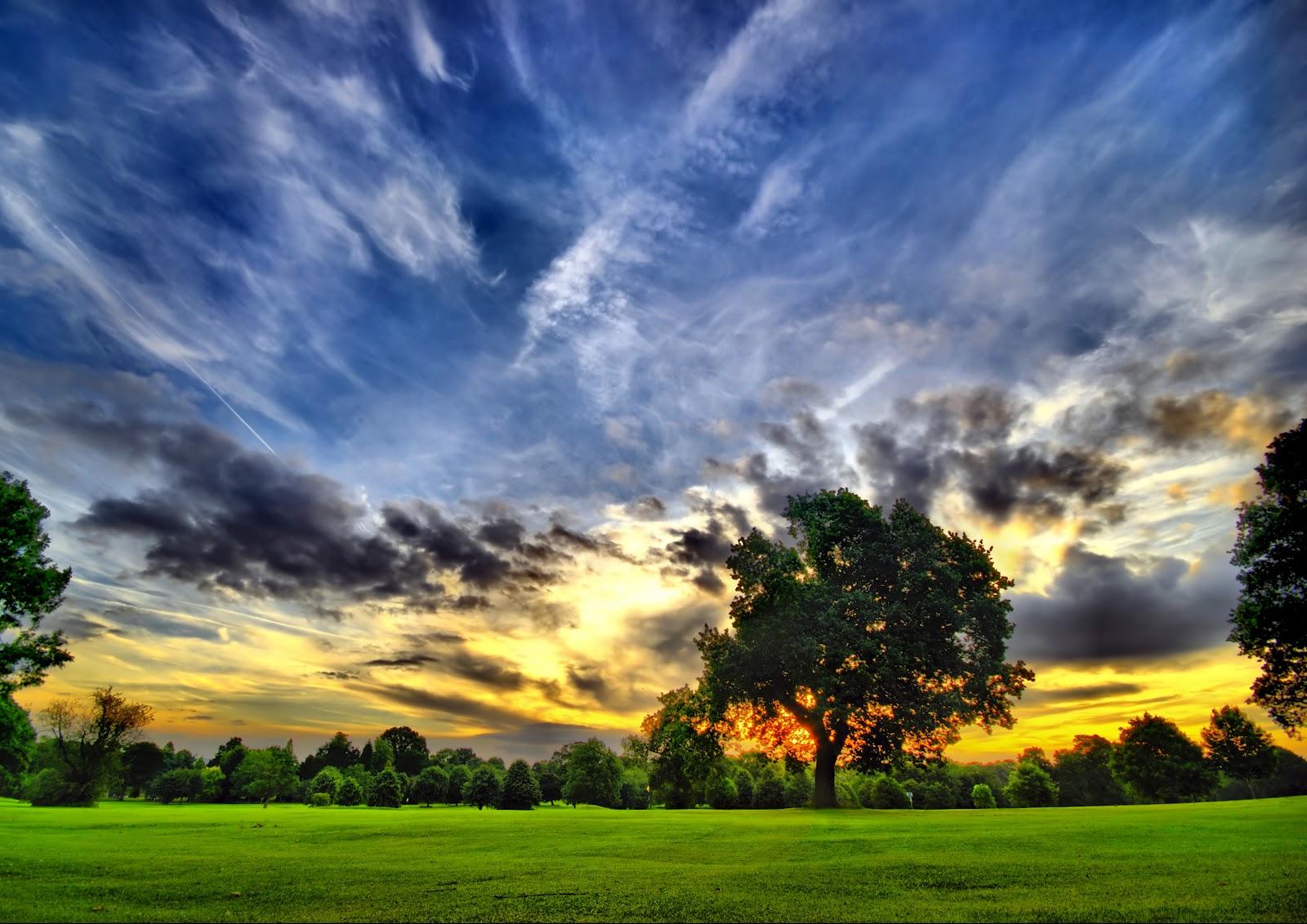 Nature Shutterstock Free Vector
