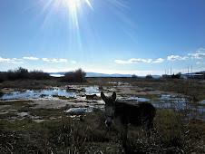 Carlotta on a sunny winter day