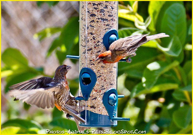 http://1.bp.blogspot.com/-zxOfpXdHeOw/Tt-UCKvPE2I/AAAAAAAAClQ/3frNac66FMI/s1600/bird%2Bpictures.jpg
