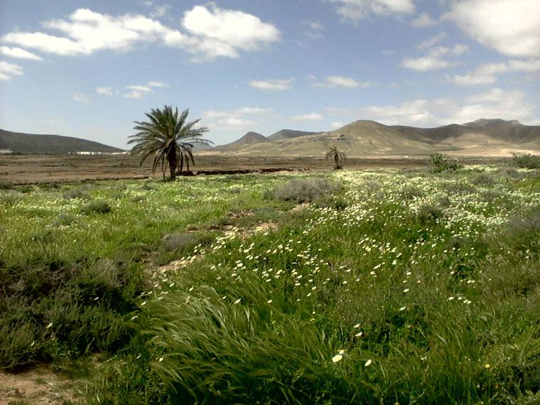 Fuerteventura florida.