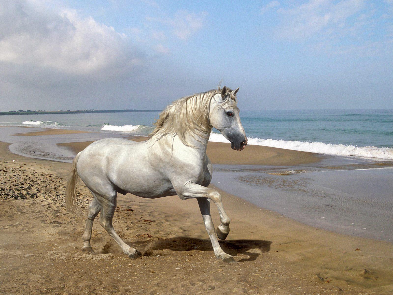 http://1.bp.blogspot.com/-zyJmQd71gb4/TDjESzRAauI/AAAAAAAAAEM/ny3DhSWeRtg/s1600/sfondo+cavallo+andaluso.jpg