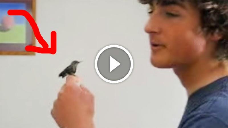 Jovem salva beija-flor da morte certa e o que aconteceu depois é extraordinário e fabuloso