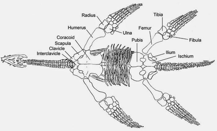 paleontolog u00eda y evoluci u00f3n en la ucm  reptiles