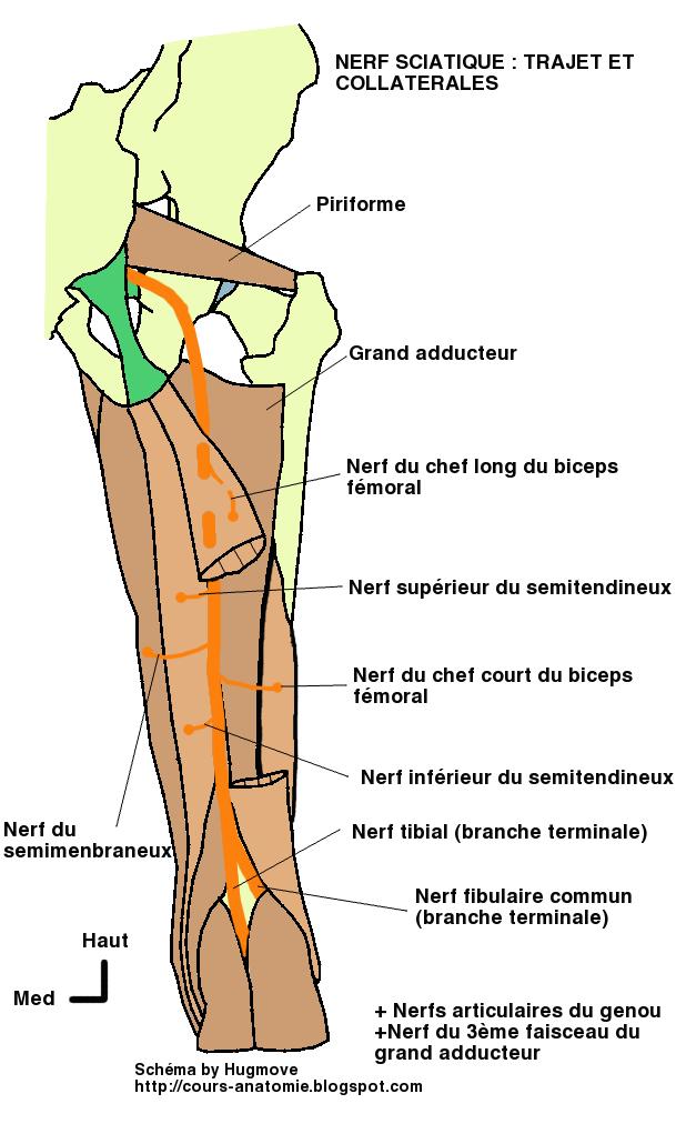 Cours d\'Anatomie: novembre 2012