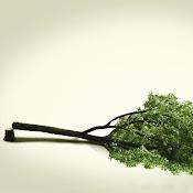 Mil árboles que crecen hacen menos ruido que un árbol que se derrumba