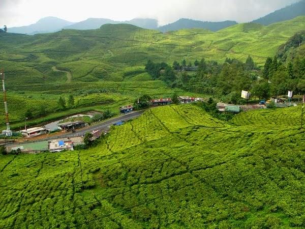 Perkebunan Teh Ciliwung Bogor