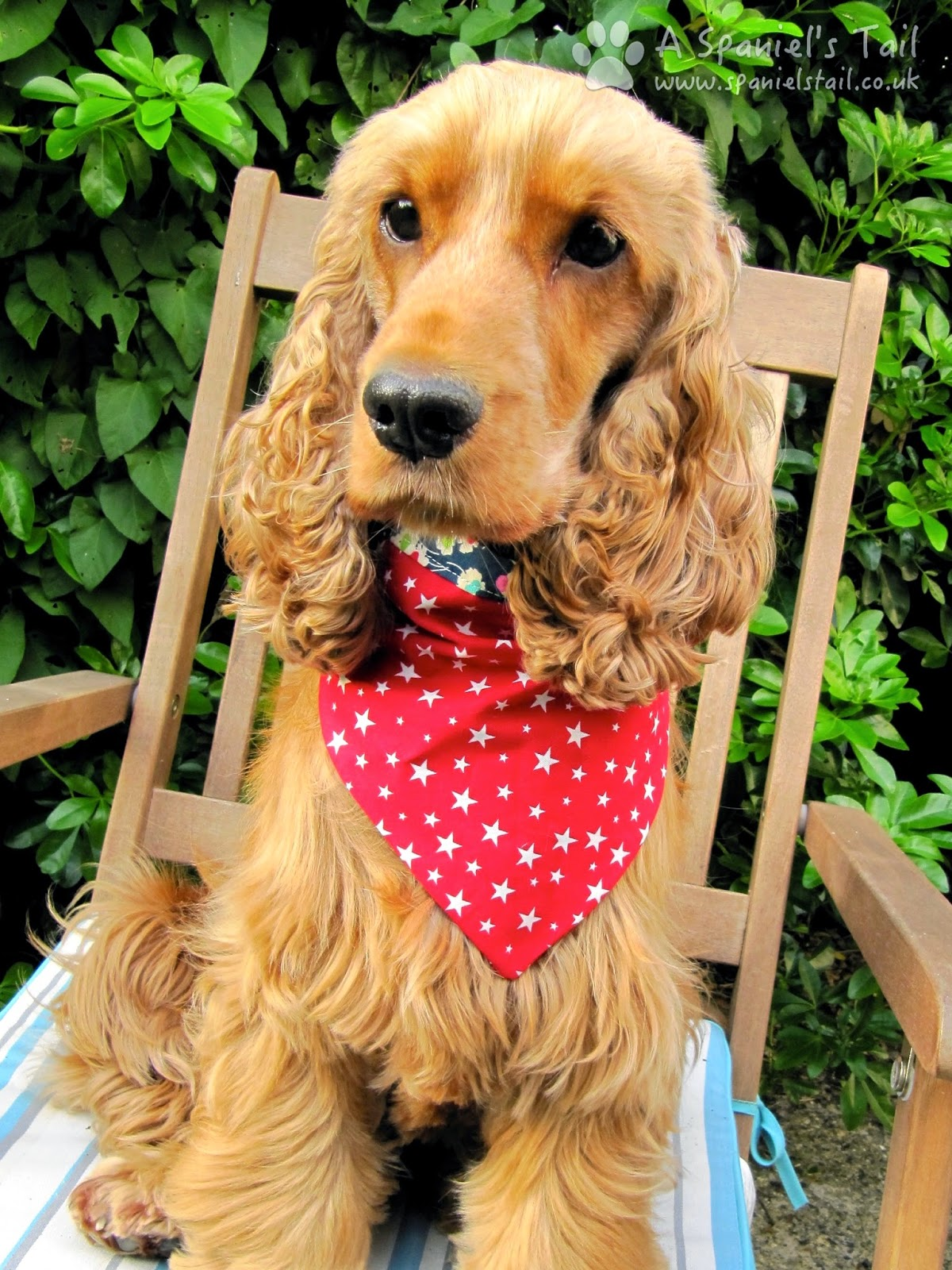 A Spaniels Tail Scrufts product review bandana scruftie