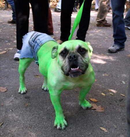 Mi mascota favorita disfraces de moda para mascotas 2012 - Deguisement halloween chien ...