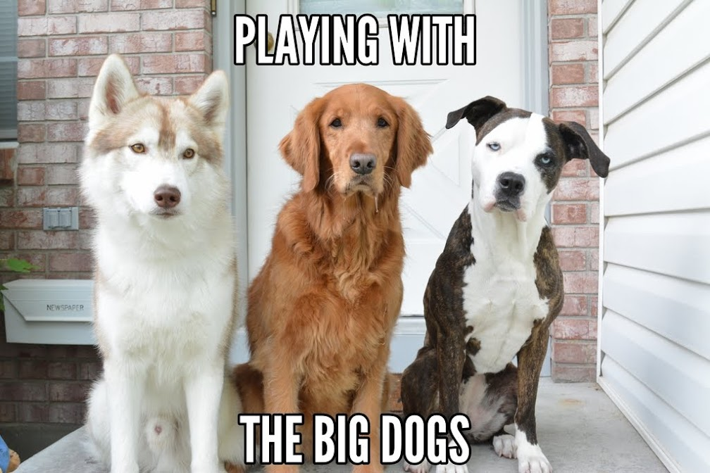 Playing with the Big Dogs.
