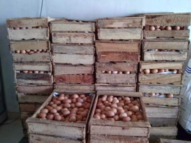 suplier telur ayam di jambi amman bille