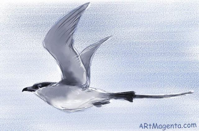 En  fågelmålning av en Fjällabb  från Artmagentas svenska galleri om fåglar.