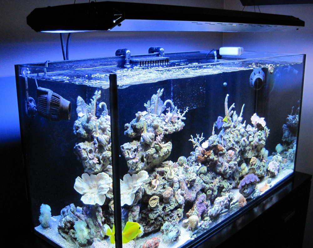 Reef aquarium setup and supplies for the beginner