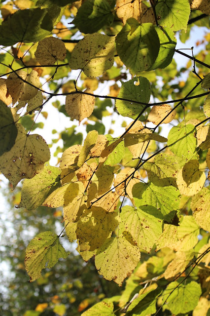 Photo Diary: Autumn photography