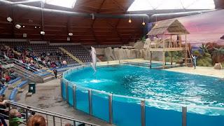 Bruges Majestic Dolphins