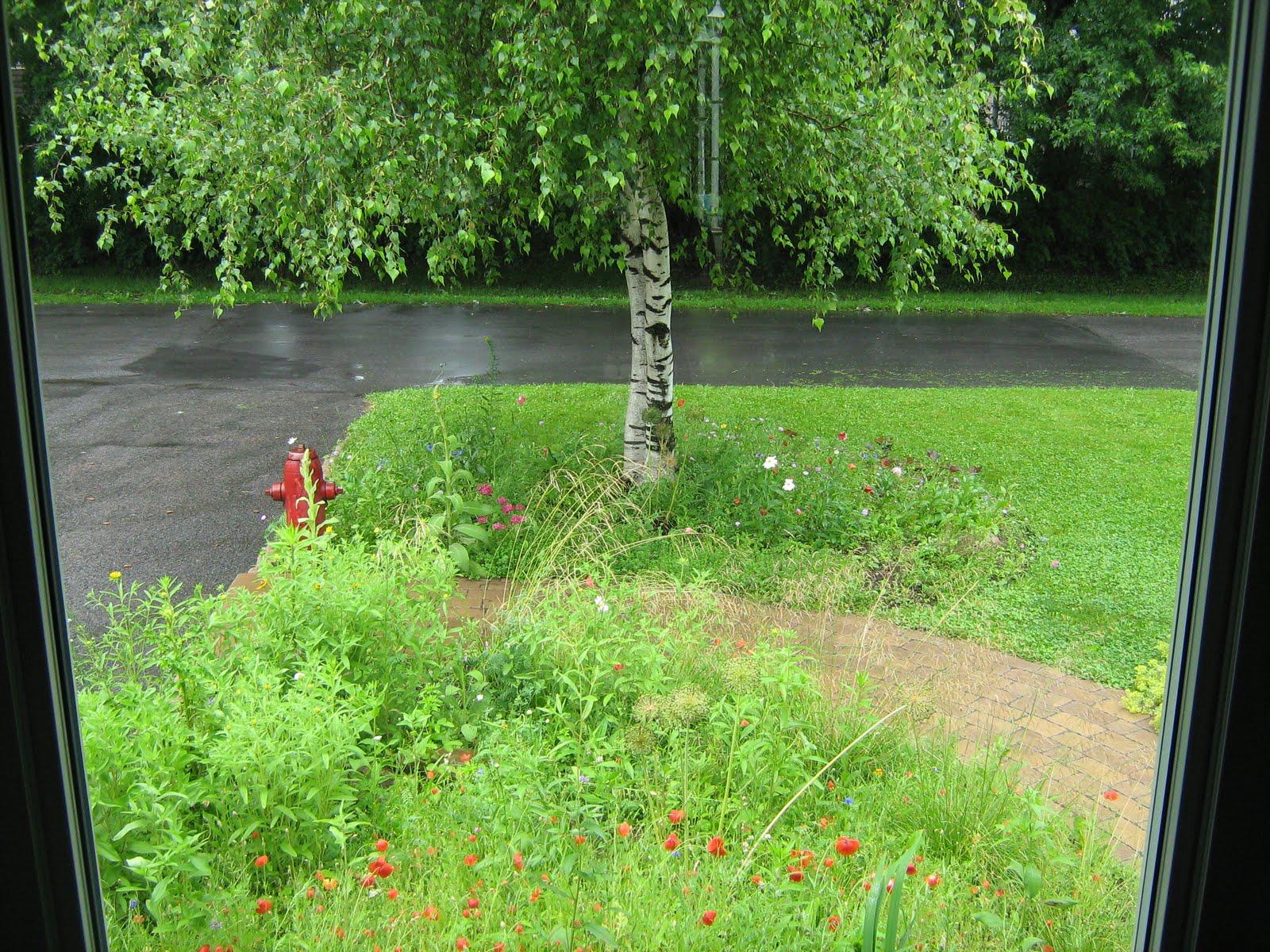Le jardin l 39 aube de l 39 t - Bettes au jardin ...