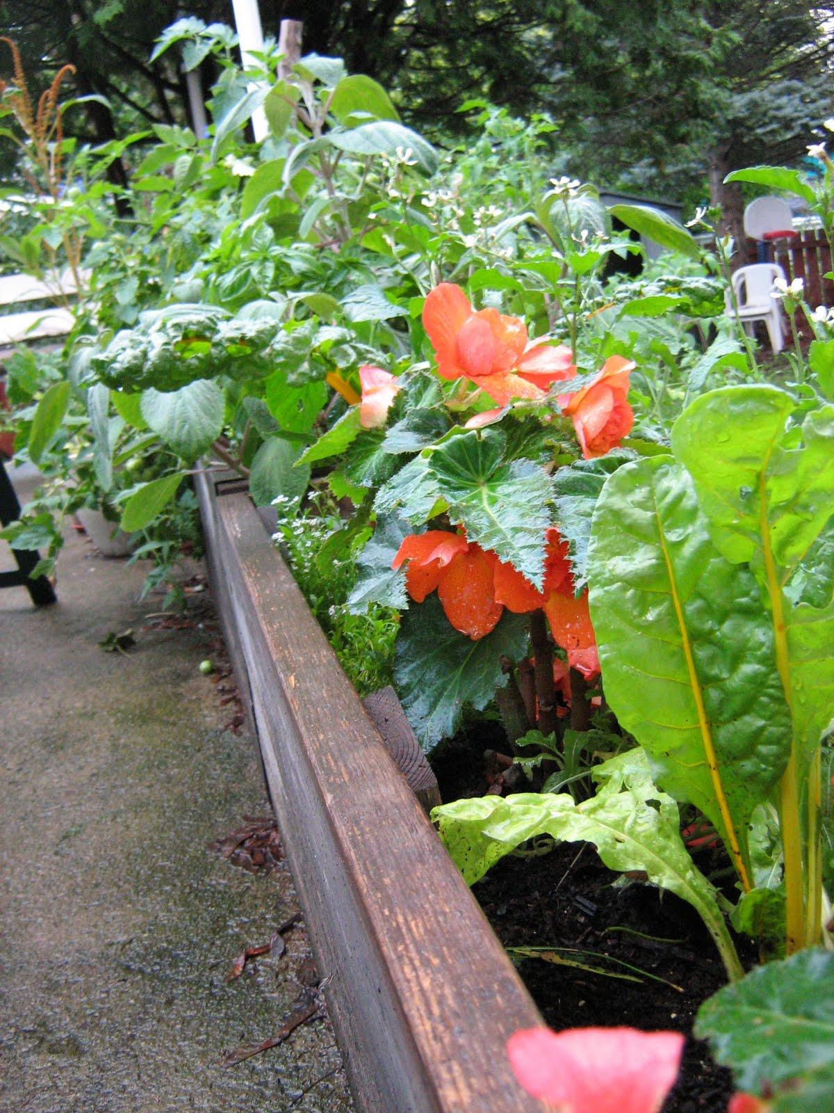 Je suis au jardin le tourbillon de l 39 t - Bettes au jardin ...