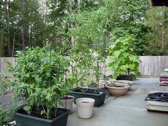 MG5 Vegetable Gardening | University of Missouri Extension