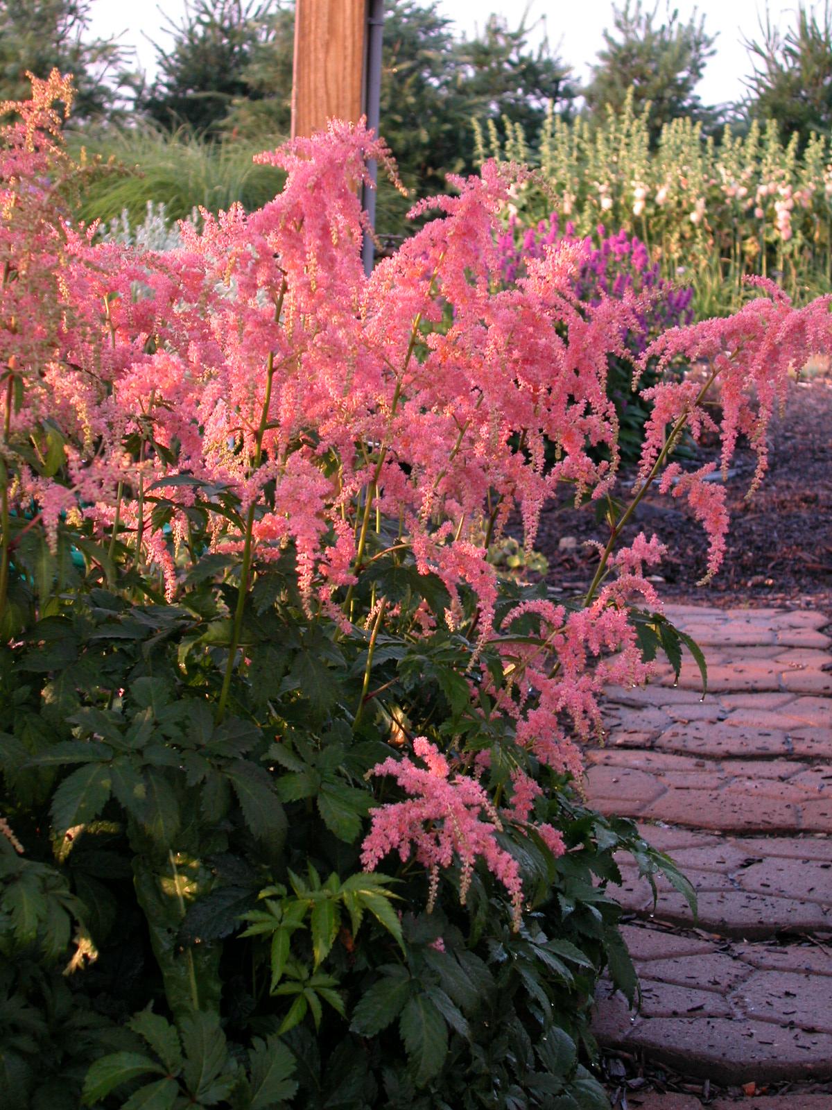 Earthworks St Peter Minnesota Perennials Vs Annuals