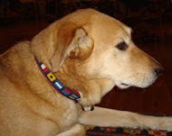 Our dog Chance models a nautical flag collar